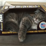 Bub in a box